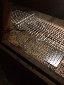 possum cage